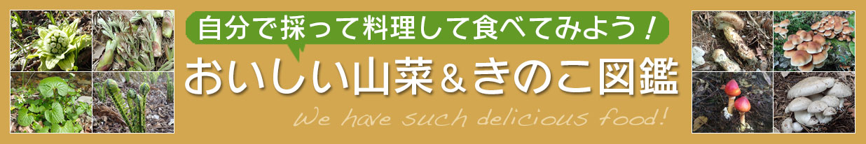 美味しい山菜&きのこ図鑑